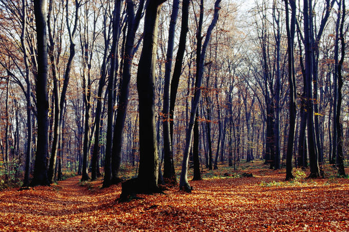 Autumn in the Wolski forest.