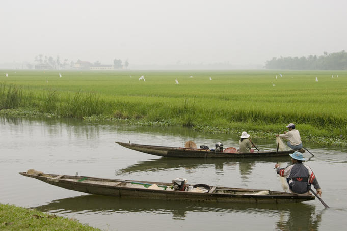 Boatmen fishing amongst rice paddies, near Thanh Toan covered bridge.