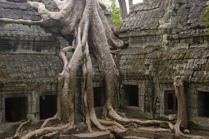 Silk-cotton tree astride stone gallery at Ta Prohm temple monastery.
