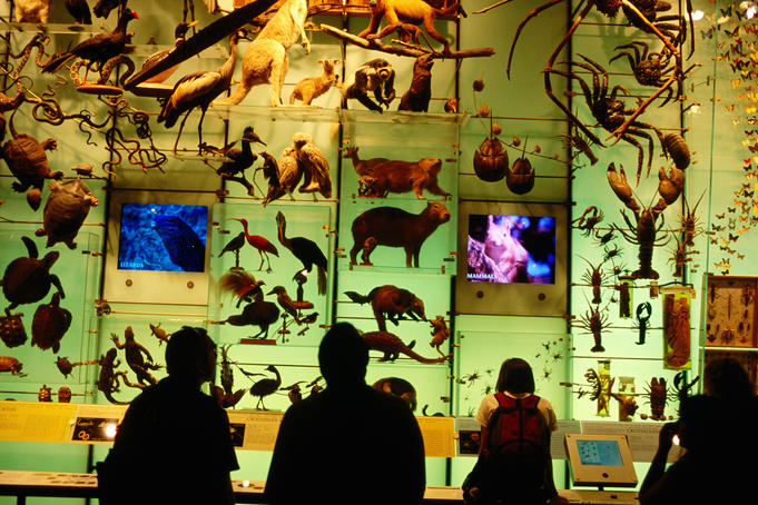 Hall of biodiversity, American Museum of Natural History.