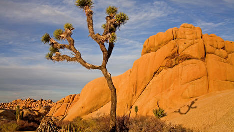Jumbo Rocks, Joshua Tree National Park