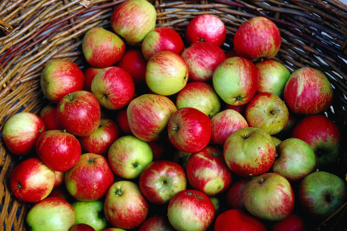 A basket of Irish Apples