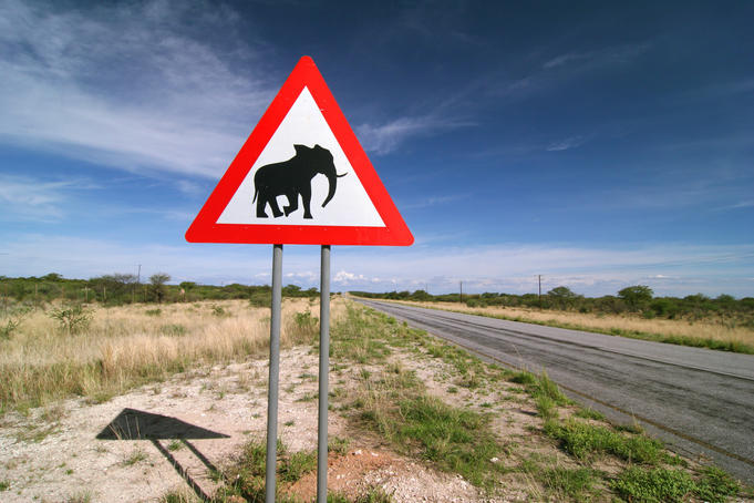 'Watch for elephants sign' on the side of a road.
