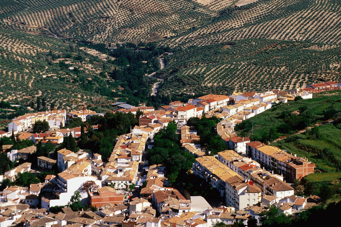 Overlooking the village of La Iruela with olive groves in background.