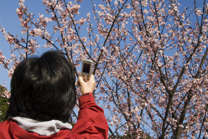 Woman taking photos of the first blossoms with a mobile phone in Higashi-gyoen.