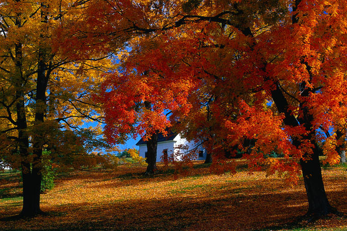 A foliage tour of New England