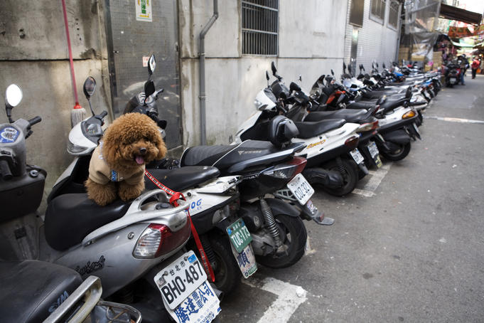 Small dog waiting patiently on its owner's scooter.