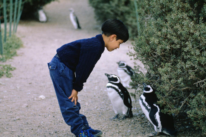 A young boy and a couple of Magellanic or jackass Penguins (Spheniscus magellanicus) get to know each other in Punta Tombo