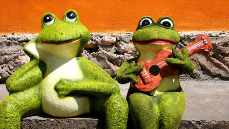 Ornamental Mexican frogs, Yucatn Peninsula