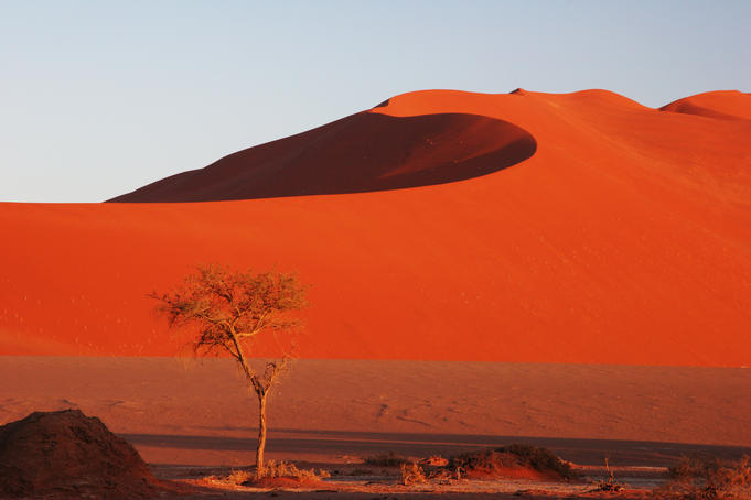 Red color of Sossusvlei sand dunes after sunrise.