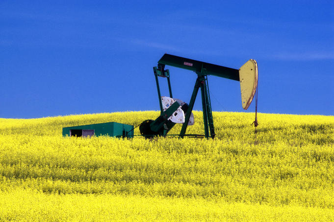 Oil pumpjack in canola field.