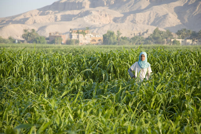 Woman standing in a field at Luxor.