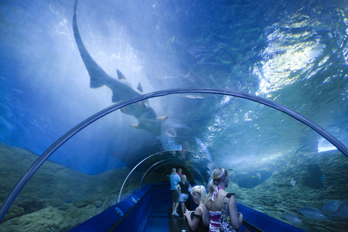 Shark gliding above the viewing tunnel as patrons look on, Aquarium of Western Australia (AQWA)