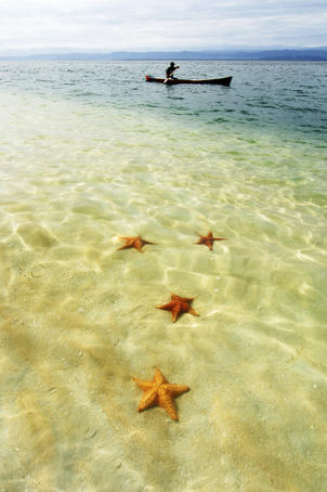 Sea stars in tropical water at Star beach.
