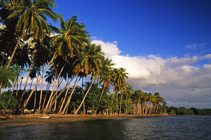 Kapuaiwa Palm Grove.