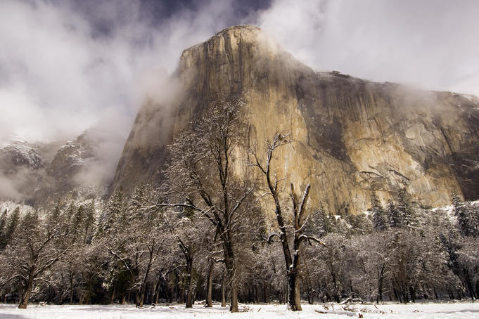El Capitan in winter with black oaks.