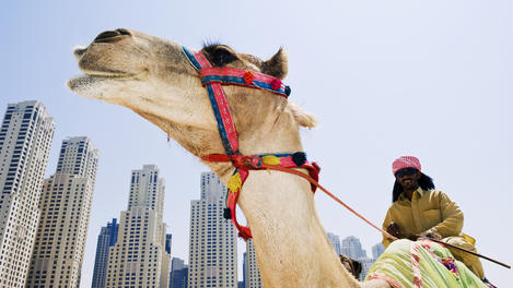 Camel and keeper, Middle East
