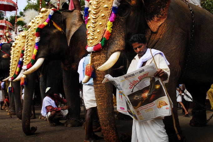 Man reading newspaper next to decorated elephant at the Thrissur Pooram festival.