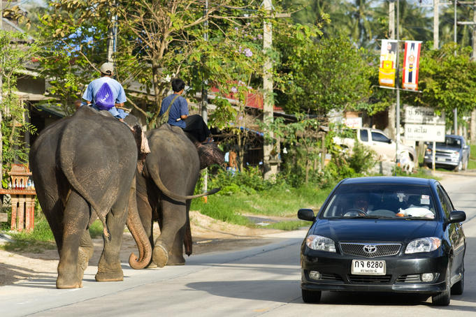 Elephant and car traffic on street.