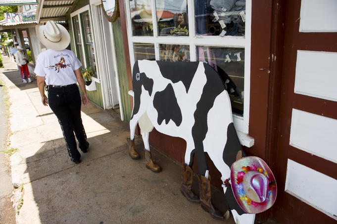 Bessie the cow at Aloha Cowboy, Makawao, Upcountry.