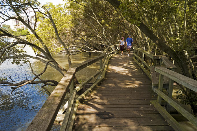 Mangrove Boardwalk on bank of Brisbane River in City Botanic Gardens.