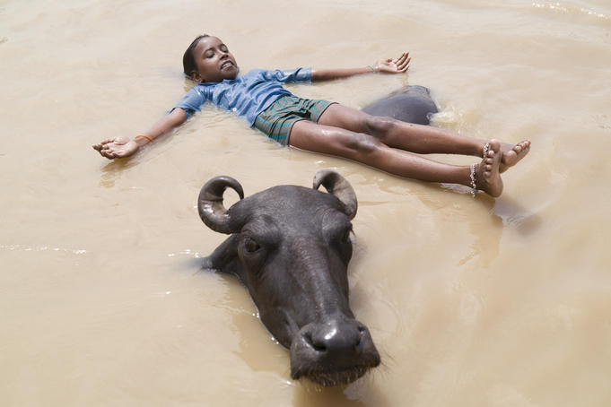 Young boy playing with a water buffalo in the Ganges River.