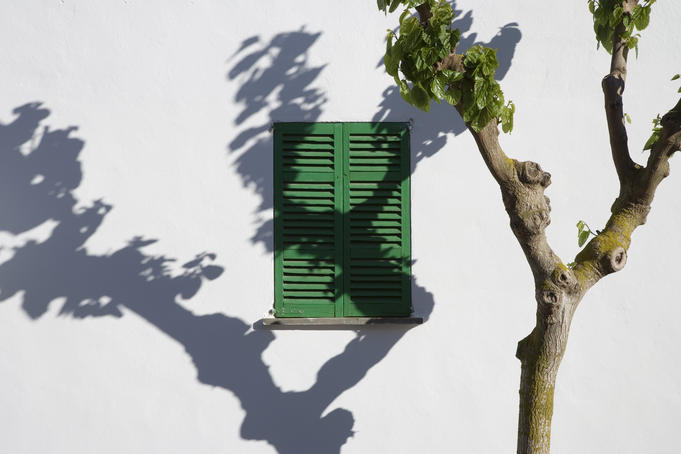 Green window with tree shadow on wall.