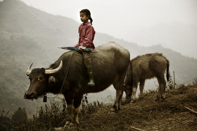 Young girl riding buffalo to Bac Ha Sunday Market.