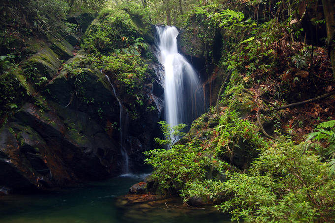 Jungle waterfall.
