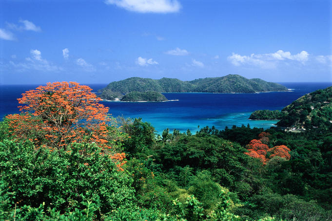 Trees with red blossoms and Little Tobago island.
