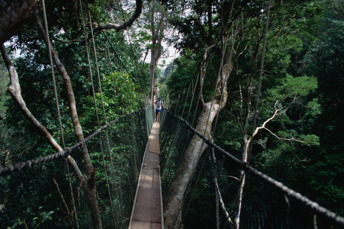Walking along the canopy bridge in Taman Negara National Park in Pahang, the park is one of the most pristine rainforests still existing in the world