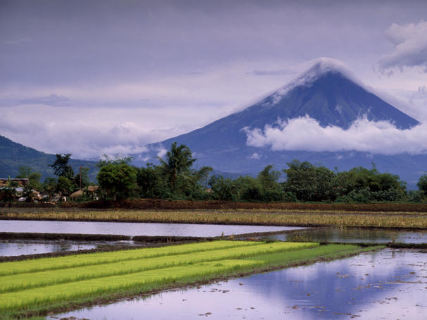 Mount Mayon active volcano rising above rice fields.
