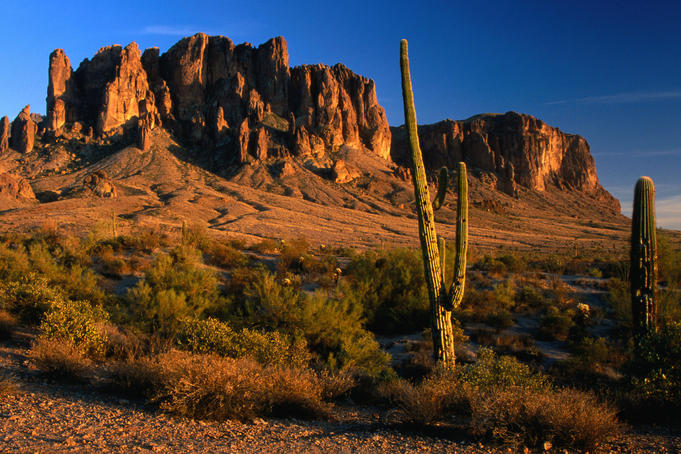 Cacti and Superstition Mountains at Lost Dutchman State Park.
