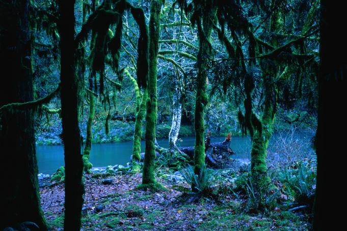 An eerie forest scene: moss hanging from tree trunks, and a still green creek at the Staircase Campground