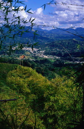 Puerto Rico's scenic drive along the Ruta Panoramica takes in the Yabucoa countryside through coffee plantations up into mountain wilderness