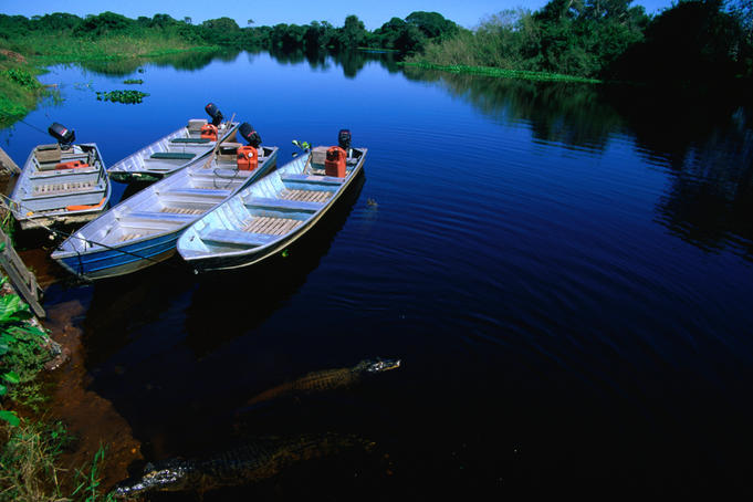Boats and Jacare (Caiman crocodilus yacare), a native crocodilian similar to an alligator, in the vast wetlands of the Pantanal- Mato Grosso, Brazil