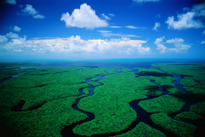 Like a big green jigsaw: aerial view of the incredible Florida wetlands