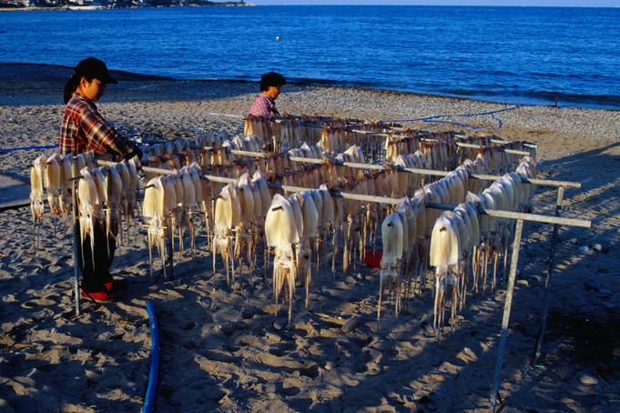 Racks of octopus, drying out by the sea.