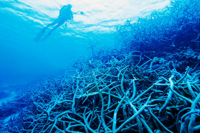 Staghorn coral clusters on Adavaci Passage.