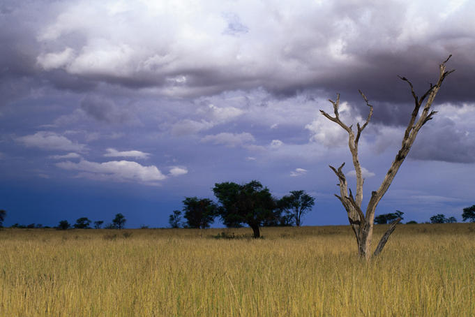 A thunderstorm brewing over grassland at Marie's Loop in the Kgalagadi Transfrontier Park, which crosses into neighbouring Botswana