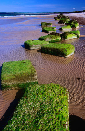 Blocks of moss on Findhorn beach in the Scottish Highlands