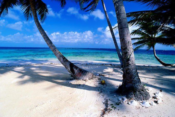 Palm trees bend to Caribbean Sea on key in San Blas Islands.