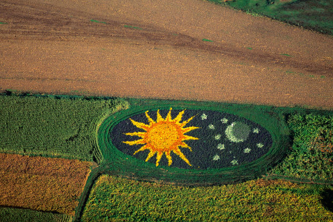Aerial of decorative corn field.