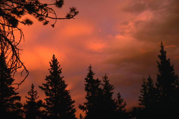 Evergreen trees frame a brilliant sunset in the Glacier National Park.