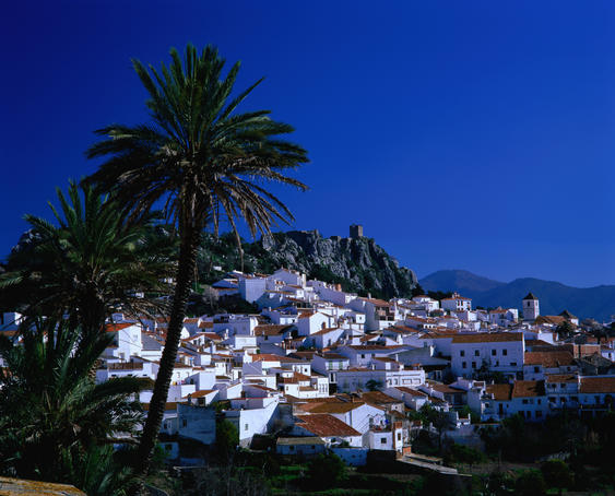 Overhead of village, famed by palm trees, Malaga Province.
