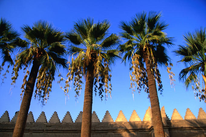 Al Amr mosque and palms.