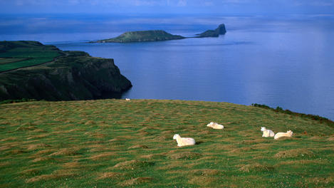 Sheep, Gower Peninsula, South Wales