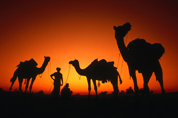Men and camels silhouetted at sunset in Thar Desert.