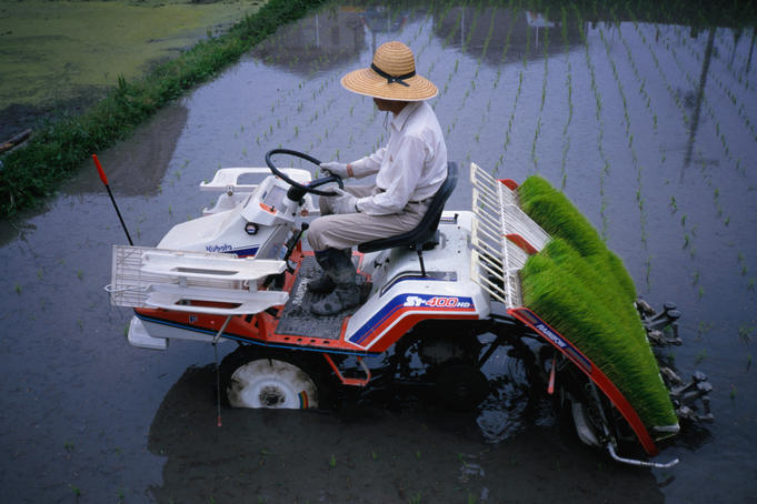 Modern farming practices for a Kyoto farmer planting rice seedlings.