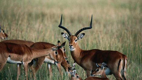 Serengeti National Park Image Gallery